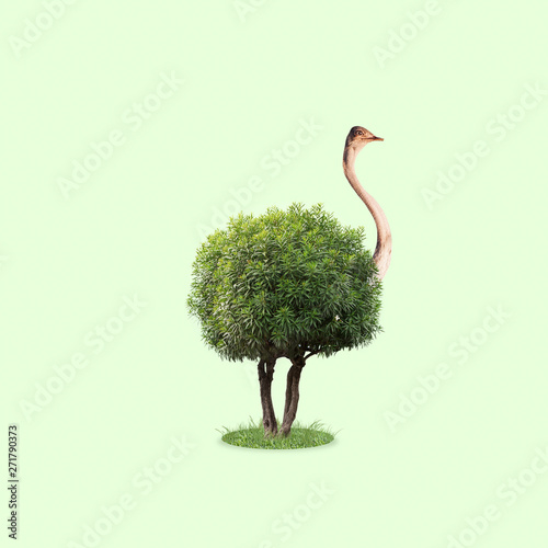 Foto op Canvas Struisvogel Ostrich with the body as a tree with leaves on green background. Concept of interaction of different nature objects. Negative space. Modern design. Contemporary and creative art collage.