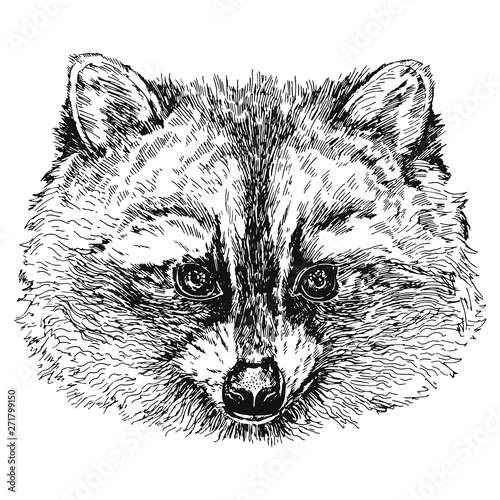 Poster Croquis dessinés à la main des animaux Hand drawn sketch style raccoon. Vector illustration isolated on white background.