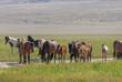 Wild Horses in the Utah Desert in Spring