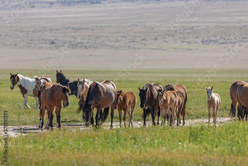 mata magnetyczna Wild Horses in the Utah Desert in Spring