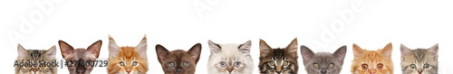 Cadres-photo bureau Chat Cats, half of muzzle on white