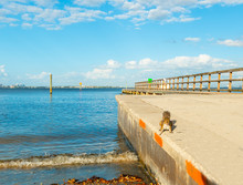 Squirrel By The Shore In Vinoy Park