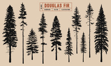 Douglas Fir Tree Silhouette Vector Illustration Hand Drawn
