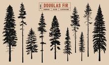 Douglas Fir Tree Silhouette Ve...