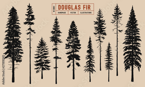 Fotografija Douglas Fir tree silhouette vector illustration hand drawn