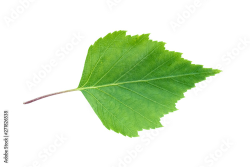 Green leaf of birch tree isolated on white background. Wallpaper Mural