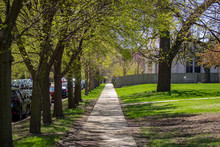 Tree Lined Sidewalk In A Chicago Neighborhood On A Sunny Spring Day.