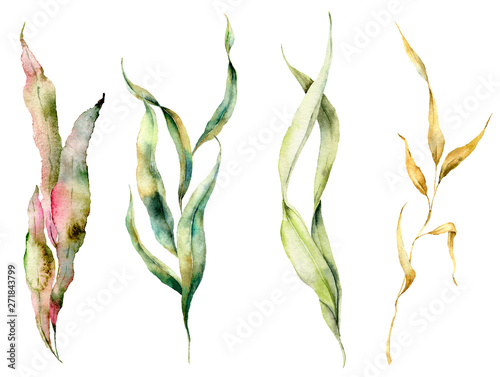 Watercolor seaweed set with laminaria branches Fototapet