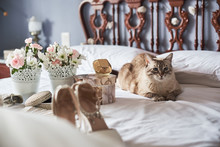 Stylish White Wedding Bridal Shoes, Perfume, Flowers, Jewelry And Cat On A Bed..