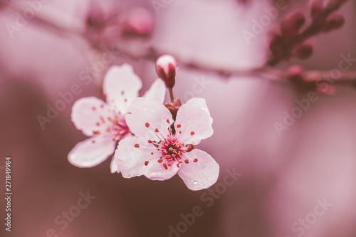 Fototapeta blossom obraz na płótnie