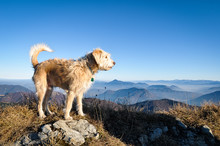 Happy Dog Standing On A Rock With Mountain Background