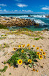 canvas print picture - Cape Columbine Nature Reserve, West Coast Peninsula, Western Cape province, South Africa, Africa
