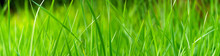 Panoramic View Of Green Grass On Green Colorful Bokeh Background, Panoramic View Of Wild Grass On Green Bokeh