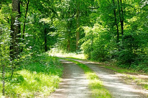 Foto op Plexiglas Groene Wild forest tree background 50,6 Megapixels 6480 with 4320 Pixels