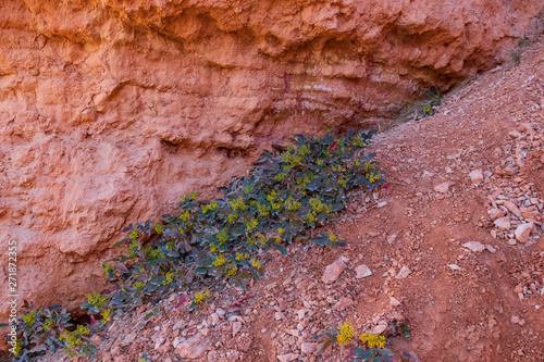 Yellow wildflower patch on rocks in Bryce Canyon National Park, Utah, USA