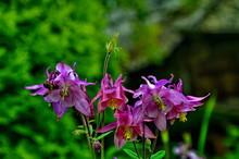 Beautiful Flowers Of A Reservoir Close Up.
