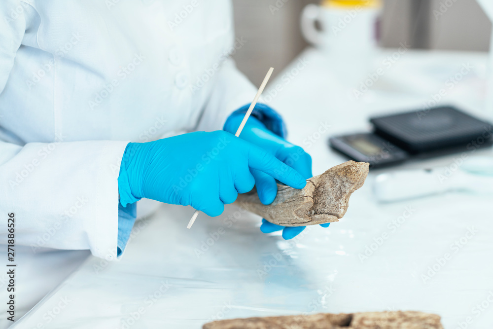 Fototapety, obrazy: Archaeology Researchers Analyzing Ancient Antler Tool in Laboratory