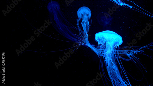 Valokuvatapetti Beautiful jellyfish moving through the water neon lights
