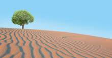 Beautiful Landscape With Lonely Tree In The Desert