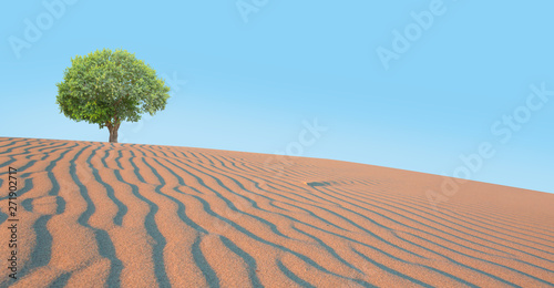Poster Trees Beautiful landscape with lonely tree in the desert