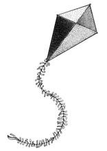 Kite Illustration, Drawing, Engraving, Ink, Line Art, Vector