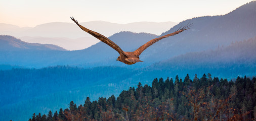 Obraz na Szkle Natura Red-tailed Hawk flying over the mountains with sky background