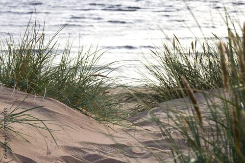 Poster Gris Düne, Ausblick auf das Meer zwischen Gräser, Schilf und Sand - Dune, sea view between grasses, reeds and sand