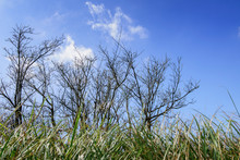 Tree Branches With Blue Sky A...