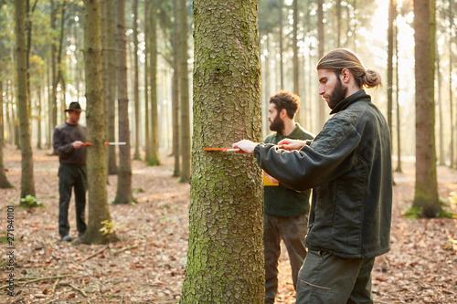 Forstwirte messen Durchmesser von Baumstämmen Fototapete