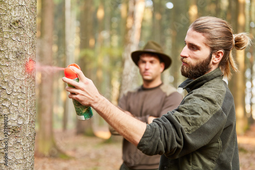 Fotografía  Forstwirt und Revierförster markieren Baum im Wald