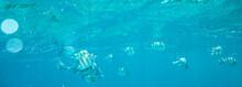 Sea Fish Near Coral, Underwater
