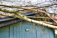 Five Big Birch Trees Are Downed In Garden On Wooden Roof Garage After Strong Tornado And Wing Storm. Disaster For Insurance Company