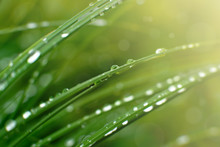 Green Grass And Raindrops In S...