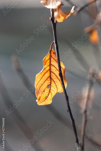 Glowing Brown Leaf