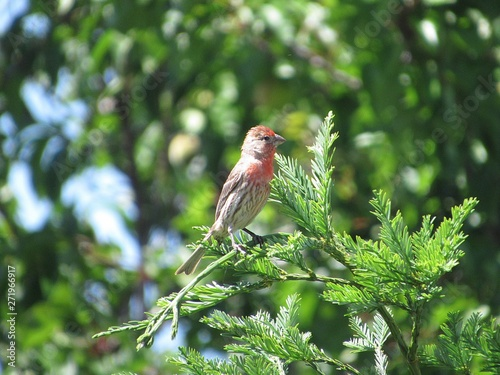 Photo  red bird on a branch