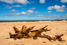 Driftwood At A Beach Of The Ba...