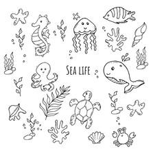 Monochrome Set Of Various Sea ...