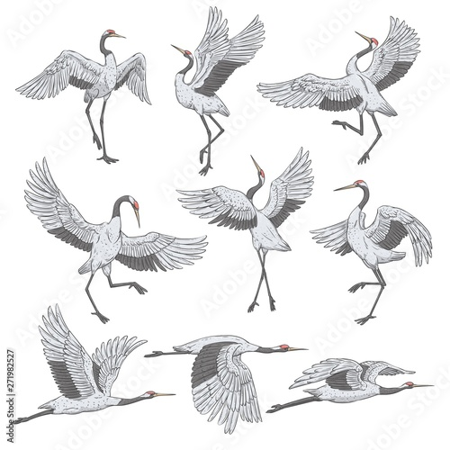 фотография Set of white cranes in different positions