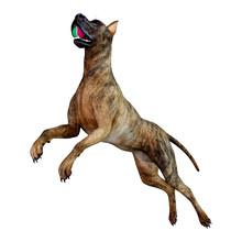 3D Rendering Brindle Great Dane Dog On White