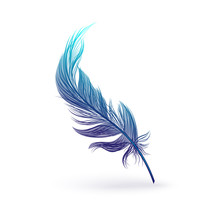 Beautiful Fantastic Feather With Bird Wing.