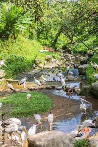 Montage in der Fensternische Pfau Bird park Taman Burung in Kuala Lumpur