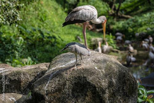 Foto auf Gartenposter Pfau Bird park Taman Burung in Kuala Lumpur