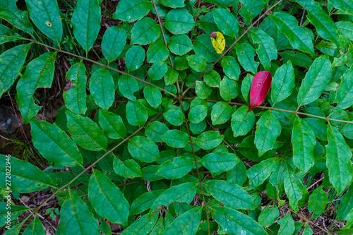 Slika na platnu 放射状に伸びる葉