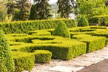 Sculpted Hedges In A Garden