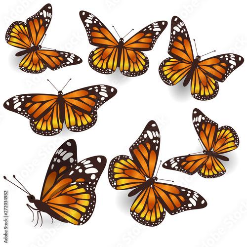 Fotografie, Obraz  Vector Orange Tropical flying Butterflies Illustration Set