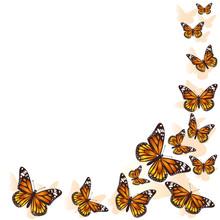 Beautiful Butterfly Flying In ...