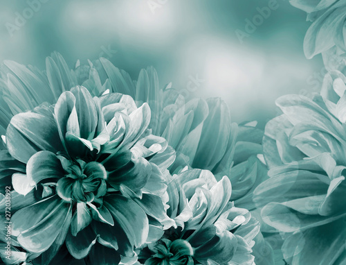 Deurstickers Dahlia Floral vintage turquoise violet beautiful background. Red dahlias and petals flowers. Close-up. Nature.