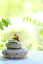 Small Snail On Stone. Spa And Relax Concept. Snail Sitting On Stack Of Pebbles, On Green Summer Background. Concept Of Calm, Relaxation, Slow, Lazy. Copy Spase.