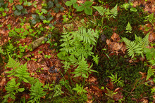 Outdoor Image Of Forest Plants...
