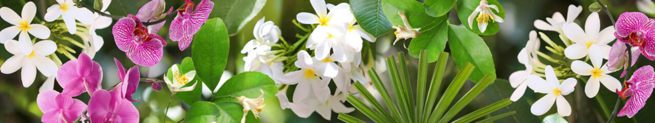 Beautiful white flowers at tropical resort on sunny day